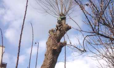 tree-felling-service-surrey