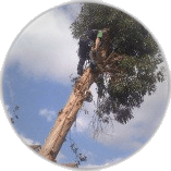 Emergency Tree Work Chessington
