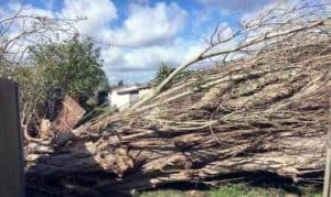 Emergency Tree Service Surrey