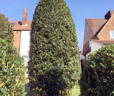 A Perfectly Trimmed Hedge
