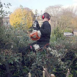 Hedge Trimming Surrey