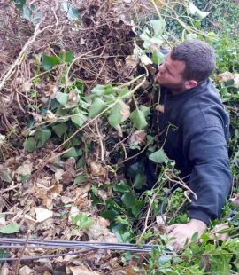 Dean Removing Ivy