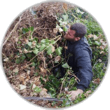Ivy Removal Twickenham