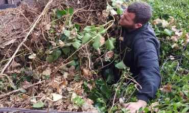 Ivy Removal Surrey