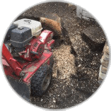 Tree Stump Removal Great Bookham