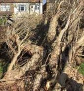 Surrey Tree Services Recent Emergency Works