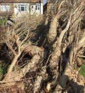 Surrey Tree Services Recent Emergency Works