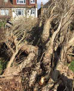 Emergency Tree Work Surrey