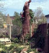 Surrey Tree Services Recent Felling Works