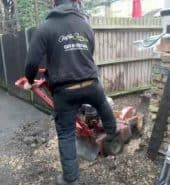 Surrey Tree Services Recent Stump Removal Works