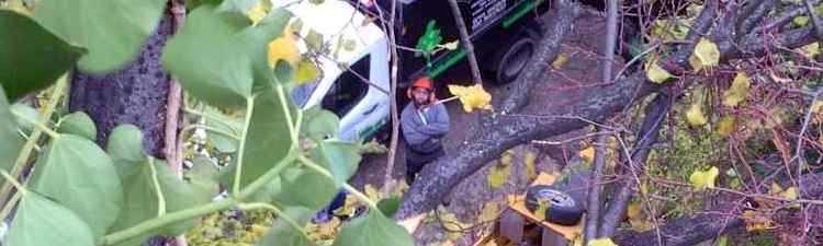 surrey-tree-surgeons-service-page-header