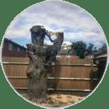tree-felling-in-ewell