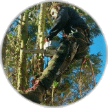 Tree Felling Oxshott