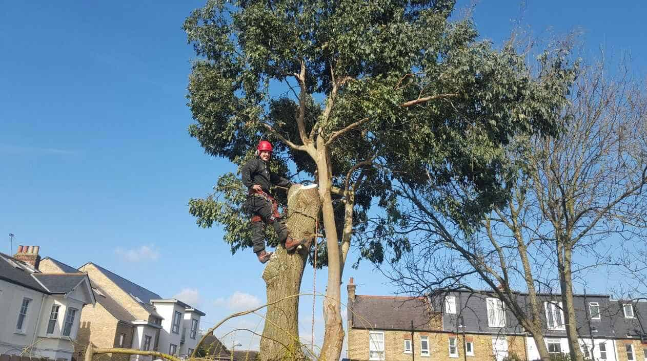 tree-felling-surrey-slider-1