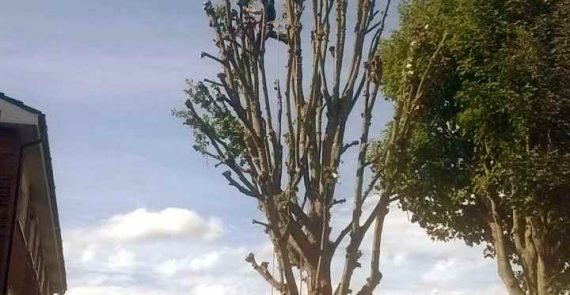 Another Tree Pruned by Charlie