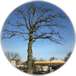 tree-pruning-in-kingston