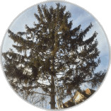 Tree Pruning Leatherhead