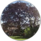tree-pruning-in-twickenham
