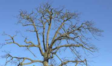 tree-pruning-service-surrey