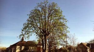 Tree Pruning Surrey