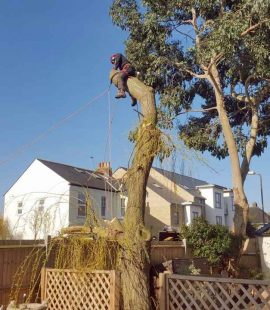 Peter Removing a Tree
