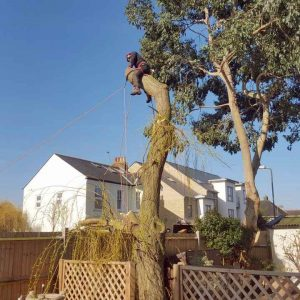Tree Removal Surrey - Removing a Tree in Sections