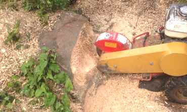 tree-stump-removal-service-surrey