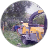 Tree Surgery Services Chessington